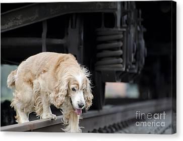 Dog Walking Under A Train Wagon Canvas Print by Mats Silvan