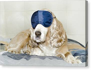 Dog With A Sleep Mask Canvas Print by Mats Silvan