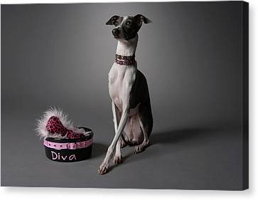 Dog With Diva Bowl Canvas Print by Chris Amaral