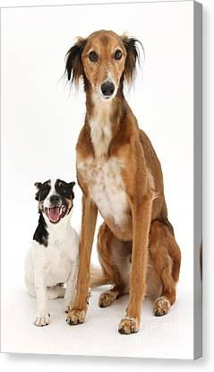 Dogs Canvas Print by Mark Taylor