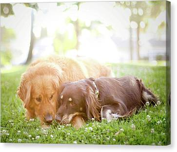 Dogs Snuggling Outside Being Cute Canvas Print