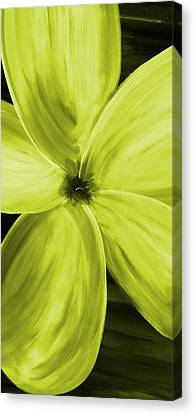 Dogwood Bloom Yellow Canvas Print by Mark Moore