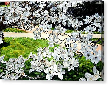Dogwood Blooms In A Virginia Church Yard Canvas Print by Thomas Akers