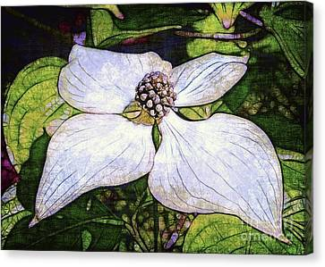 Dogwood Days Canvas Print by Judi Bagwell