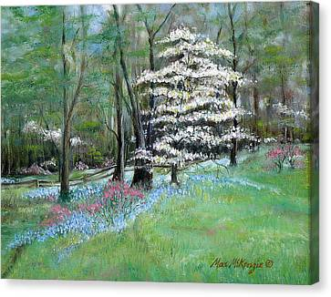 Dogwood In Springtime Canvas Print by Max Mckenzie