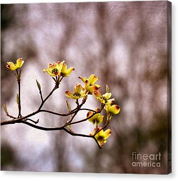 Canvas Print featuring the photograph Dogwood by Tamera James