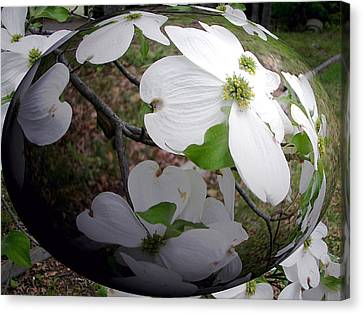 Dogwood Under Glass Canvas Print by Pamela Hyde Wilson