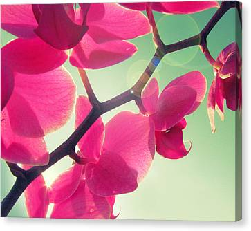 Fuchsia Canvas Print - Dolce by Amy Tyler