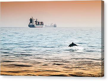 Dolphing Playing In The Sunset Canvas Print by Stephen McCluskey