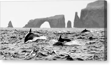 Dolphins At Anacapa Arch Canvas Print