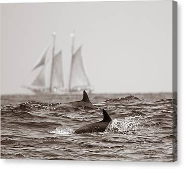 Dolphins With Ship Canvas Print by Will Edwards