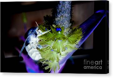 Don't Bee Blue Canvas Print by Renee Trenholm