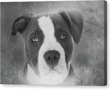 Don't Hate The Breed - Black And White Canvas Print by Larry Marshall