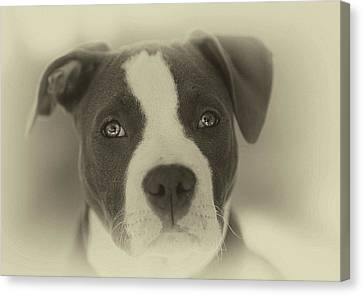Don't Hate The Breed Canvas Print by Larry Marshall