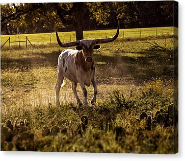 Barbecue Canvas Print - Don't Mess With Texas ..... Long Horns That Is  by Kelly Rader