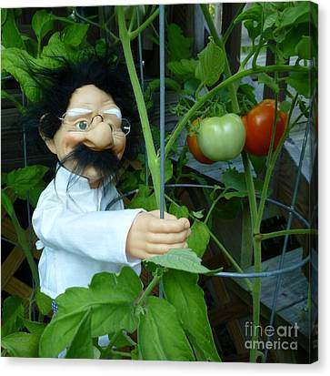 Canvas Print featuring the photograph Dorf Chef Doll With Tomatoes by Renee Trenholm