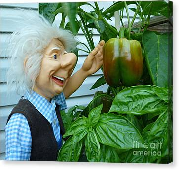 Canvas Print featuring the photograph Dorf Grandpa Doll Picking Bell Peppers by Renee Trenholm