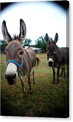 Canvas Print featuring the photograph Doting Donkeys by Lon Casler Bixby