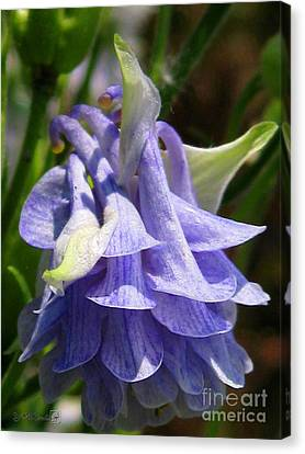 Canvas Print featuring the photograph Double Columbine Named Light Blue by J McCombie
