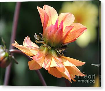 Canvas Print featuring the photograph Double Floral by Eve Spring
