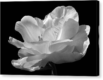 Canvas Print featuring the photograph Double Late Angelique Tulip by Darleen Stry