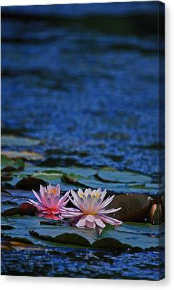 Double Lily Canvas Print by Karol Livote