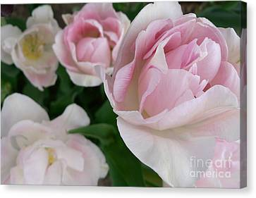 Canvas Print featuring the photograph Double Pink by Laurel Best