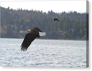 Double Trouble Eagles Canvas Print by Kym Backland