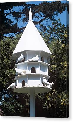 Doves Canvas Print by Adrian Thomas