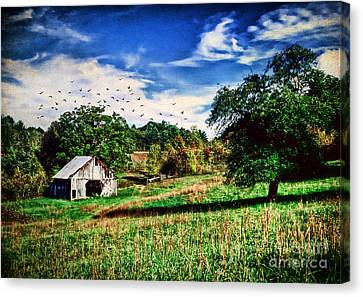 Down On The Farm Canvas Print by Darren Fisher