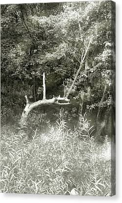 Canvas Print featuring the photograph Dragon Bones by Mary Almond