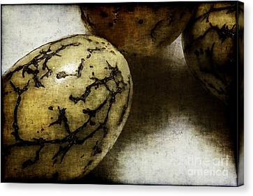 Dragon Eggs Canvas Print by Judi Bagwell