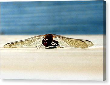 Dragon Fly Eyes Canvas Print by LeeAnn McLaneGoetz McLaneGoetzStudioLLCcom