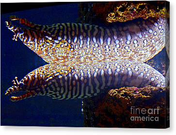 Dragon Moray Eels Canvas Print by Pravine Chester