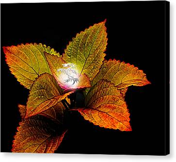 Dragon Plant Patronus Canvas Print by Michael Taggart