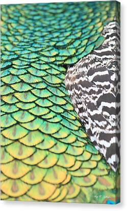 Dragon Scales Canvas Print by Amy Gallagher