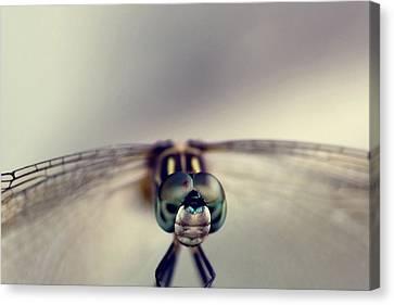 Dragonfly Eyes Canvas Print - Dragonfly Art by Joel Olives
