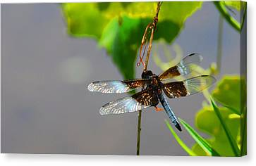 Dragonfly Canvas Print by Cindy Manero