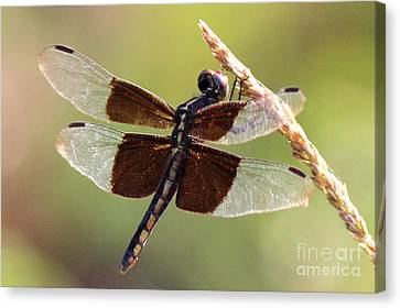 Canvas Print featuring the photograph Dragonfly Closeup by Kathy  White