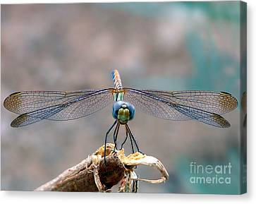 Dragonfly Headshot Canvas Print by Graham Taylor