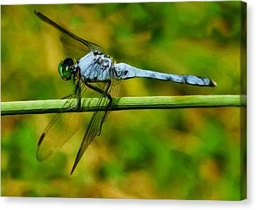 Dragonfly Canvas Print by Jack Zulli