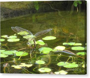 Canvas Print featuring the photograph Dragonfly by Laurianna Taylor