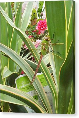 Dragonfly Canvas Print by Laurie Kidd