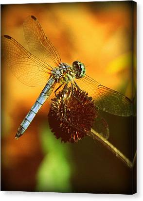 Dragonfly On A Dried Up Flower Canvas Print by Tam Graff
