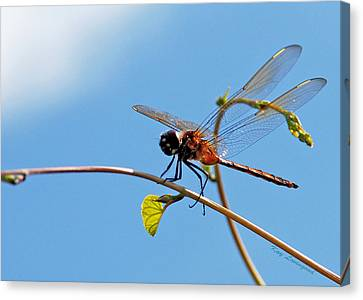 Canvas Print featuring the photograph Dragonfly On A Vine by Kay Lovingood