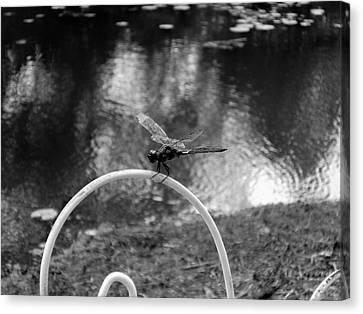 Dragonfly On Rim Canvas Print by Floyd Smith
