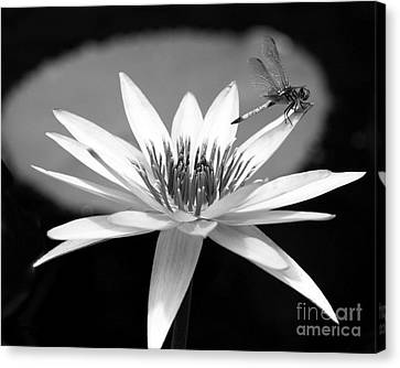 Dragonfly On The Water Lily Canvas Print by Sabrina L Ryan