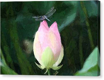 Dragonfly On Water Lily Canvas Print