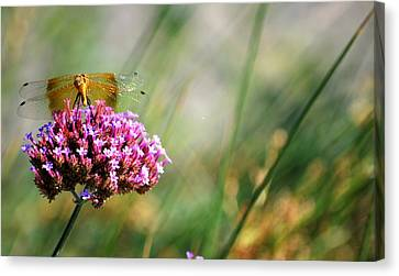 Canvas Print featuring the photograph Dragonfly Wings by Amee Cave