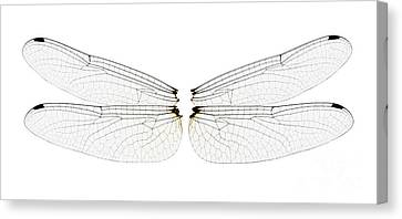 Dragonfly Wings Canvas Print by Raul Gonzalez Perez